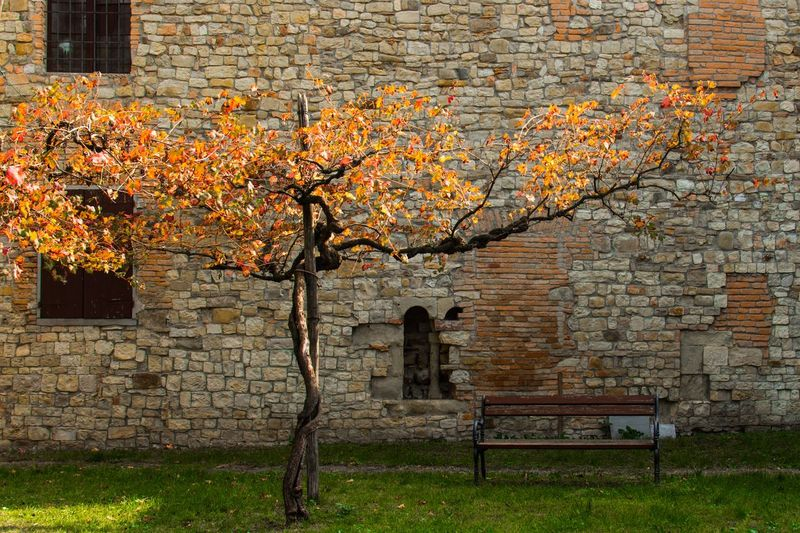 Grape Leaf  Autumn colors Bench Plant Autumn Seat Bench Architecture Wall Autumn Mood Brick Wall Building Exterior Brick Tree Beauty In Nature Outdoors No People Day Wall - Building Feature Nature