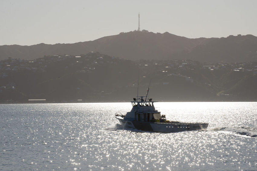 pilot vessel silhouetted against backlit sea Mt Kaukau Silhouette Wellington  Backlit Boat Nautical Vessel Sea Vessel Water Wellington Pilot Boat