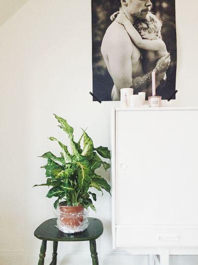 Home Home Home Sweet Home Family❤ White Personal Interior Plants 🌱 Plant Life Scandinavia