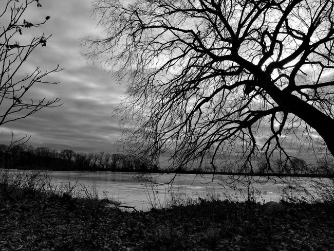 The Crooked and Frozen Tree Nature Water Beauty In Nature Tranquility Outdoors No People Lake Sky Day Cloud - Sky Scenics Branch