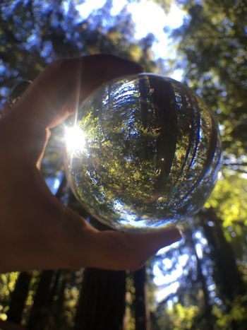 Shiny Holding Sunlight Tree Human Hand One Person Close-up Low Angle View Focus On Foreground Outdoors Real People Day Human Body Part Nature Crystal Ball Orb Redwoods Redwood Forest Forest Sun Forest Redwood Trees Redwood Fragility Sky People