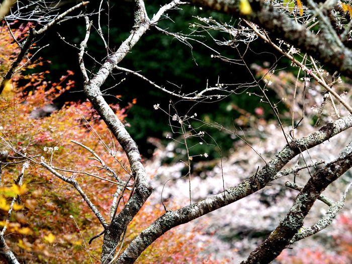 Tree Spider Web Close-up