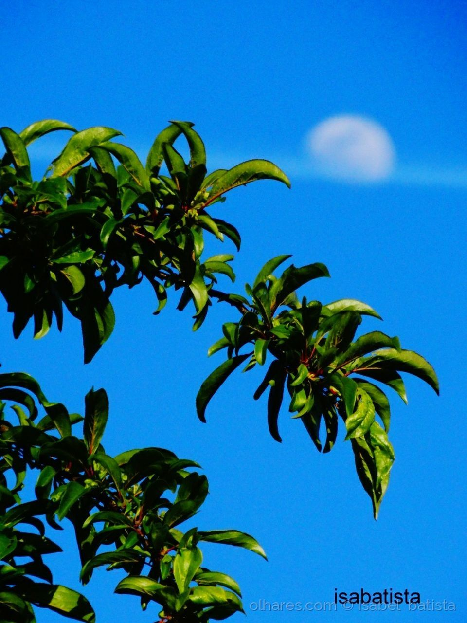 leaf, blue, growth, clear sky, nature, day, beauty in nature, plant, low angle view, tree, sky, outdoors, no people, close-up, freshness