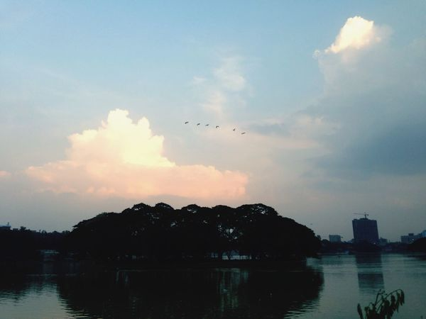 ☀️🌅 Birds Water And Sky Tree And Sky IPhoneography Sunset Missyou