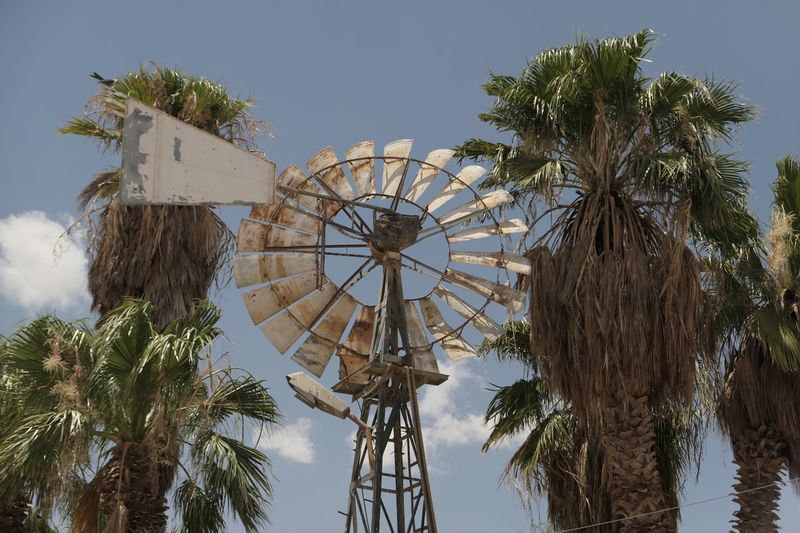 Arid Climate Tree Sky Low Angle View Plant Renewable Energy Nature No People Alternative Energy Fuel And Power Generation Day Environmental Conservation Wind Turbine Wind Power Outdoors Traditional Windmill