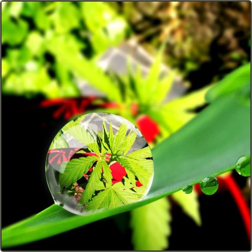 Capture Tomorrow Flower Head Flower Leaf Insect Butterfly - Insect Close-up Animal Themes Plant Green Color