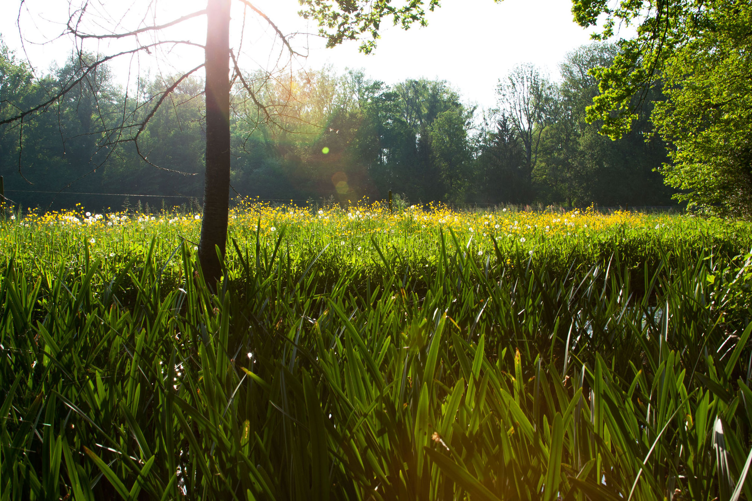plant, growth, tree, land, field, green color, tranquility, beauty in nature, landscape, tranquil scene, nature, grass, day, environment, scenics - nature, no people, sky, rural scene, agriculture, outdoors, blade of grass