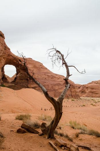 Bare tree in desert against sky