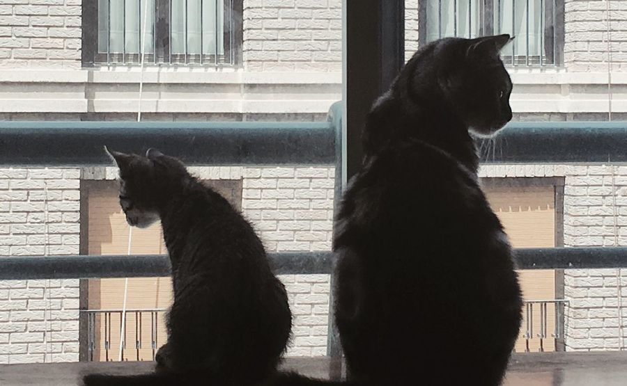Window Animal Themes Pets Domestic Animals Mammal One Animal Domestic Cat Day Sitting Built Structure Building Exterior Dog No People Architecture Outdoors Close-up Pets Corner National Geographic Purina Catfood Sell Getty Images Shadow Nature Two Of A Kind Let's Go. Together.
