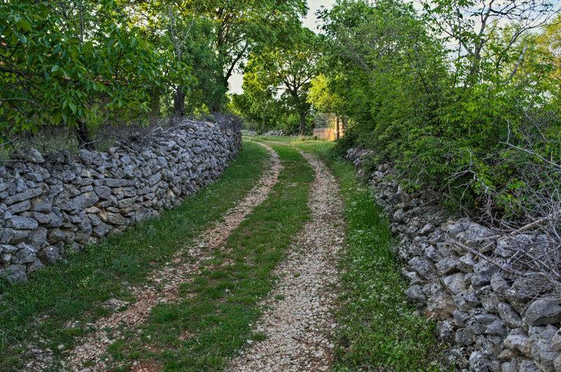 Countryside road with stone fences on both sides Path Road Tranquility Travel View Countryside Day Fence Greenery Landscape Nagure Nature No People Outdoors Peaceful Rocks Rural Scene Springtime Stone Tree Village