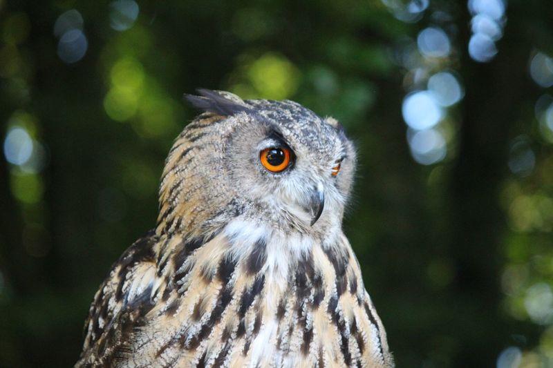 Close-up of owl on tree