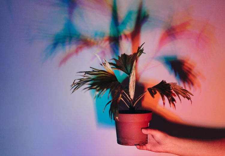 Shadow. Colors Colorful Colours Hand Human Hand Human Body Part Shadow Shadow Play Potted Plant Indoors  Growth Multi Colored Nature EyeEm Ready   AI Now Love Yourself Visual Creativity Creative Space The Still Life Photographer - 2018 EyeEm Awards The Creative - 2018 EyeEm Awards
