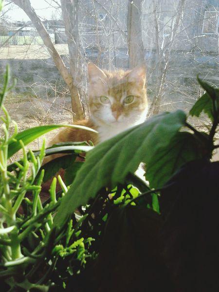 Window View Cat Plant Spy Cat Is Spying