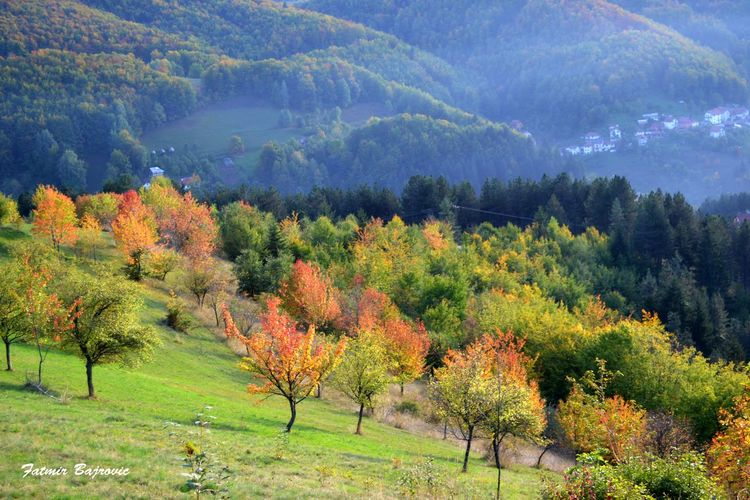 October colors Autumn Beauty In Nature Change Day Field Forest Green Color Growth Idyllic Landscape Lush Foliage Mountain Mountain Range Nature Non-urban Scene Scenics Season  Tranquil Scene Tranquility Tree
