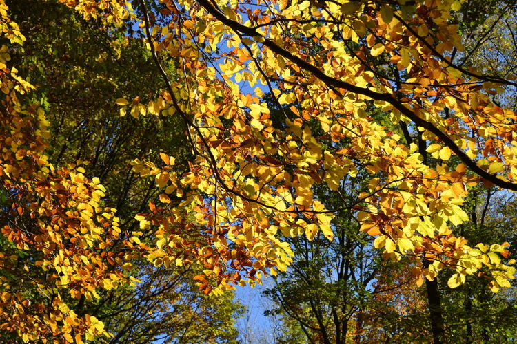 Autumn colours Autumn, Beauty, Brown, Green,yellow, Blue, Colours, Bright, Nature, Trees, Branches Wonderful Beauty Colour Close Up No People,outrdoors,day,leaf Sky, Germany, Walk, Forest