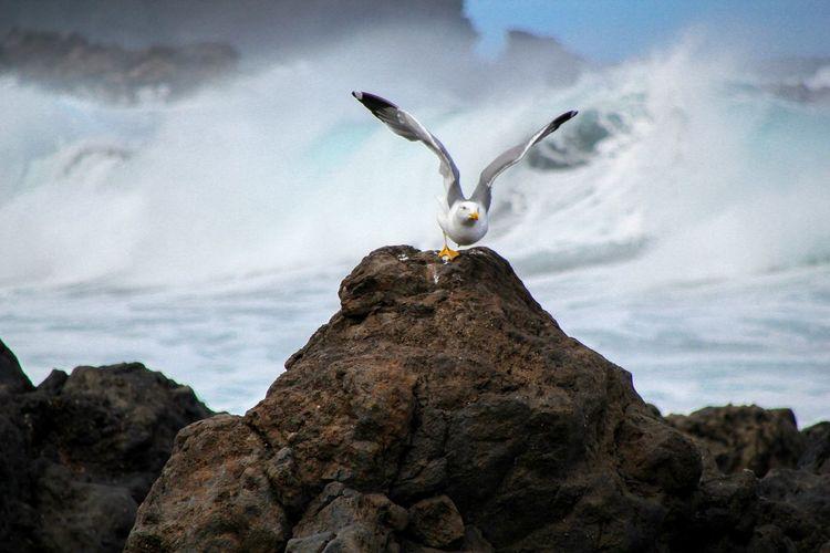 Seagull flying against sea