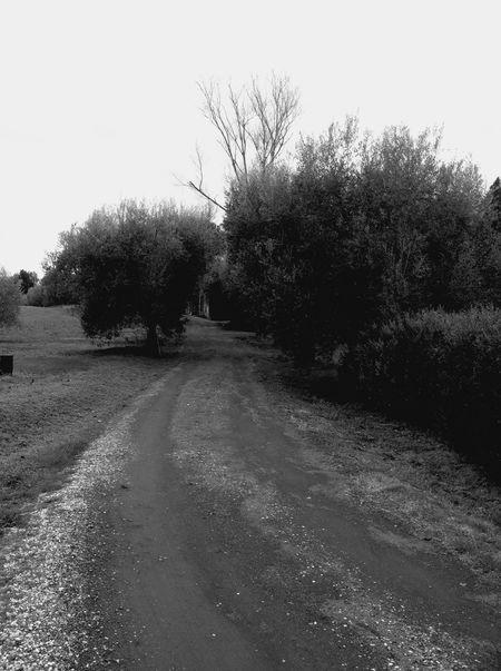 Blackandwhite strada di casa mia La Strada Strade Strade Perdute Olive Blackandwhite Paesaggio Natural Roma Italy❤️ Foto Più Seguite