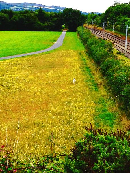Protecting Where We Play Walking Around Grass Green Collection Landscape Landscape_Collection Landscape_photography Landscapes Nature_collection Pathway Walkway Nature Photography Nature Collection Nature Nature On Your Doorstep Nature_perfection Nature_ Collection  Nature Beauty Nature Textures Nature Texture Nature Texture. Fieldscape Fields Of Gold Fields And Railway Line Meadow