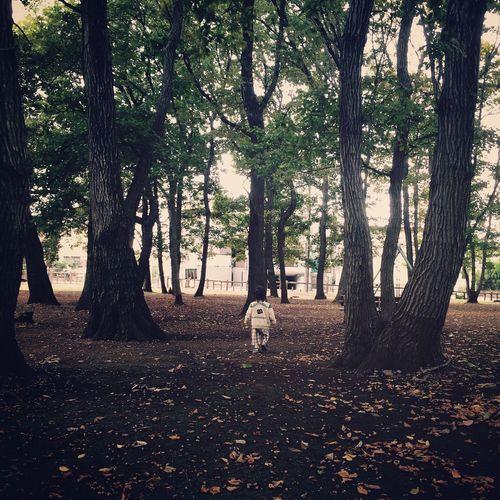 Acorn Acorns Autumn Forest Autumn Woods Backshot Children Back Shot Forest Stepping On Acorns Tranquility Walking
