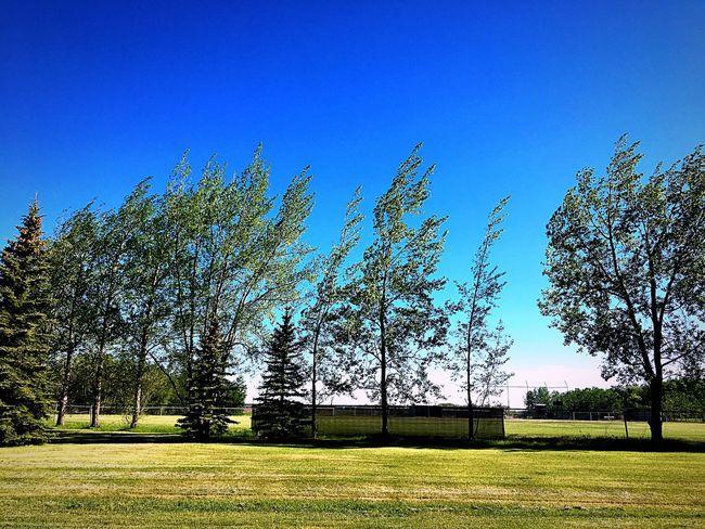 Eye4photography  Beginnerphotographer Photooftheday Beauty In Nature EyeEm Cloud - Sky Grass Unwinding Outdoors Tree Sunlight Sunlight And Shadow Daylight Photography Windy EyeEm Nature Lover