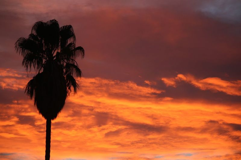 On fire Sunset Orange Color Cloud - Sky Beauty In Nature Sky No People Silhouette No Edits Illuminated Art palm tree