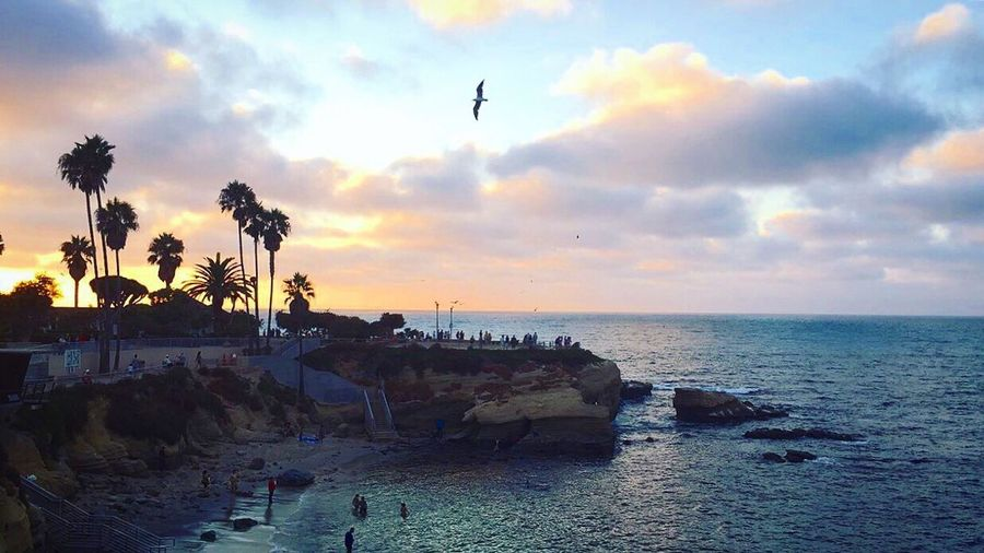 Been There. Sunset San Diego La Jolla La Jolla Cove California California Dreaming Palm Tree Horizon Over Water Cloud - Sky Scenics Tranquility Beach Lost In The Landscape Done That. Travel Destinations Summertime Cali San Diego Ca Beachphotography Beach Life Free Freedom