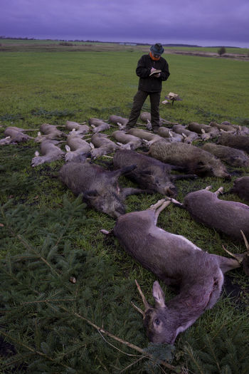 Wild Agriculture Gelege Jagd Men Nature Wild Wildlife Wildlife Photography