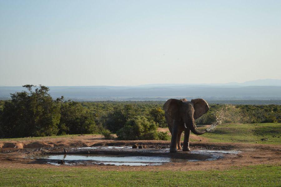 Addo Addoelephantpark Drinking Elephant Elephants Majestic Masterpiece Nature Nature Photography Nature's Beauty Naturelovers Non-urban Scene South Africa Washing Water Wildlife Wildlife & Nature Wildlife Photography
