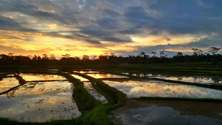 Magic sunset in Bali. Bali Bali Indonesia Sebali Agriculture Beauty In Nature Cloud - Sky Day Lake Landscape Nature No People Outdoors Puddle Reflection Rice Paddy Rural Scene Scenics Sky Standing Water Sunset Sunset #sun #clouds #skylovers #sky #nature #beautifulinnature #naturalbeauty #photography #landscape Tranquil Scene Tranquility Tree Water