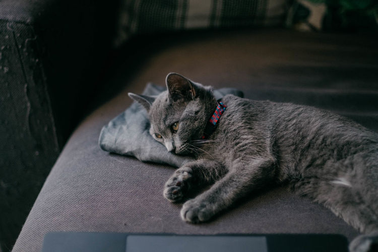 sat kitten lying down cat kitty gray Close-up Lying Down Day Whisker Focus On Foreground Resting No People Relaxation Vertebrate One Animal Mammal Domestic Animals Domestic Pets Feline Domestic Cat Cat Sad Madrid British Gray Gato Moody Sky Depressed