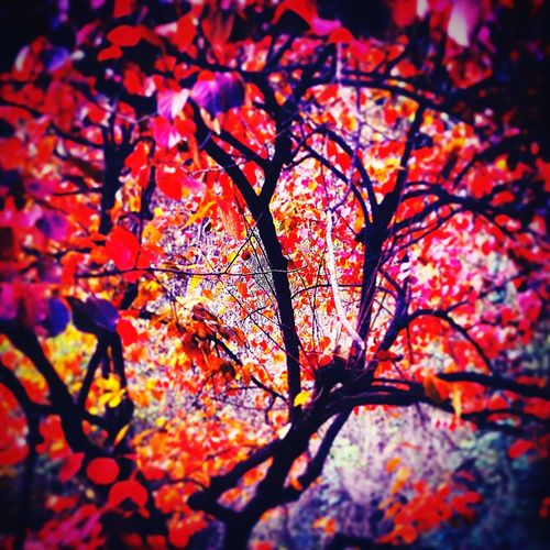 Magicnature Autumn Tree Change Beauty In Nature Forest Scenics WoodLand Tree Trunk Tranquil Scene Day Tranquility Wonderful World WonderfullLife Perspectives On Nature See The Light