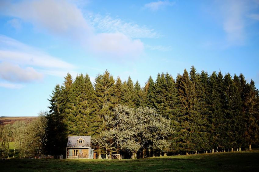Hut Forest Cabin In The Woods Cabin Plant Sky Tree Cloud - Sky Architecture Built Structure Nature