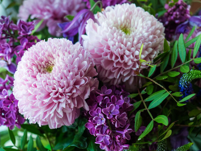 Flowering Plant Flower Plant Vulnerability  Fragility Freshness Beauty In Nature Pink Color Close-up Petal Growth Inflorescence Flower Head Nature Focus On Foreground No People Day Outdoors Selective Focus Plant Part Bunch Of Flowers Lilac Purple Flower Arrangement