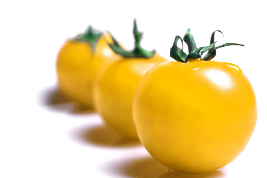 Close-up of yellow Tomatoes in a Row isolated on white Background. Cocktail Tomatoes Tomatoes Tomato Yellow Tomatoes Yellow Fruit Fruits Green Food Studio Shot Freshness Indoors  No People Vegetable Cut Out Ripe Close-up White Background Raw Healthy Eating Wellbeing Isolated Vegetables Organic In A Row Food And Drink Vegetarian Food
