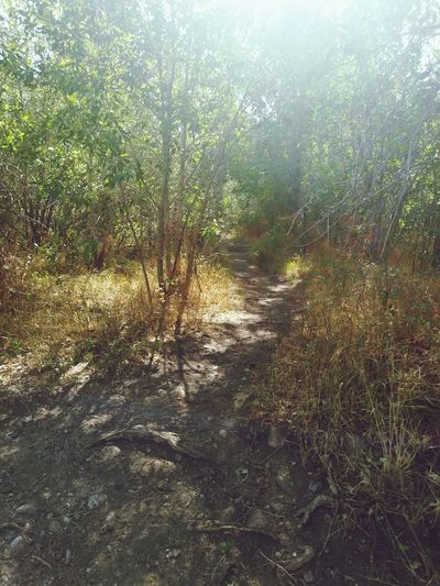 Trail Nature Summer Grass Sunrays Woods Pathway Walkway Treelined Greenery