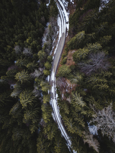 path in between. Tree Plant Nature Transportation No People Road Forest Scenics - Nature Growth Beauty In Nature Tranquility Land Day High Angle View Non-urban Scene Outdoors Tranquil Scene Motion Direction Environment Flowing Water Drone  Dronephotography Drone Photography Droneshot Dji DJI Mavic Pro DJI X Eyeem Austria Österreich Steiermark Styria Moody Nature_collection Nature Photography Naturelovers EyeEm Best Shots EyeEm Selects EyeEm Gallery EyeEm Drone Shots Road Track Path