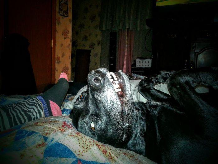 dog's smile