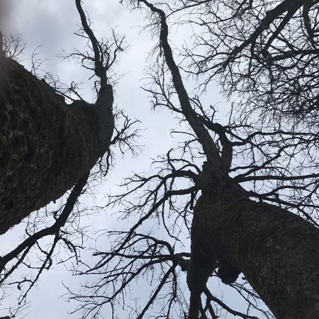 Tree Low Angle View Branch Sky Bare Tree Nature Tree Trunk No People Outdoors Beauty In Nature Day Old Trees