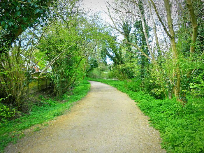 Taken by me on my Nikon S3200 today. Spring Nature Trees LydiardPark Swindon Wiltshire Uk Europe 2016