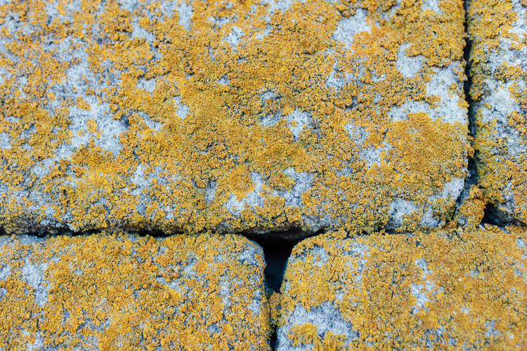 Lines Moss & Lichen Rock Rock Wall Textured  Textures And Surfaces Wall Close-up Day Full Frame Lines And Shapes Moss Moss Close Up Moss Covered Rocks Outdoors Rock - Object Rocks Textured  Wall Rock Wall Textures Walls Yellow
