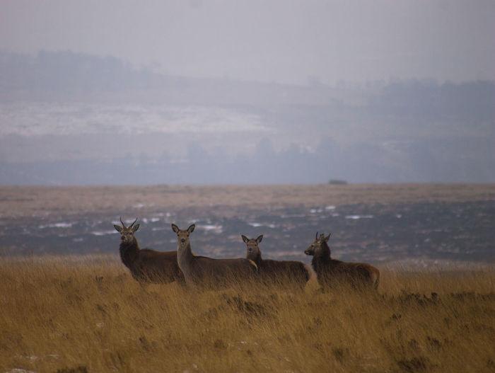 Deer standing on landscape