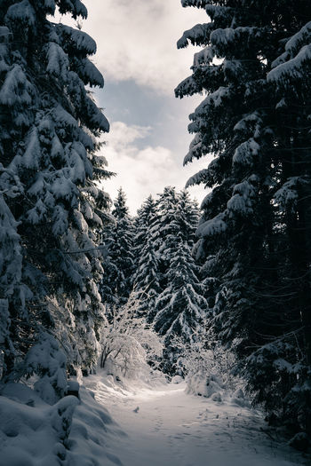 Trees On Snow Covered Mountain Against Sky