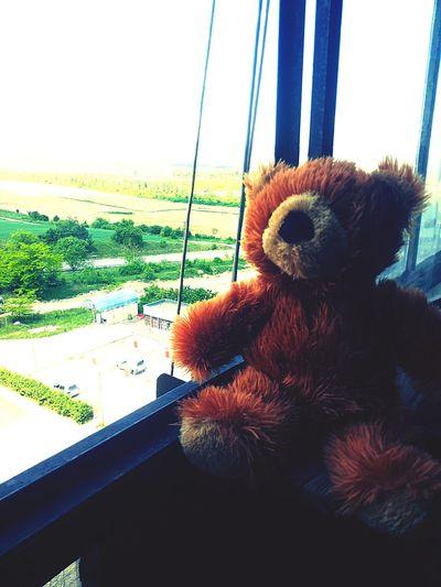 Teddy<3 Love ♥ Morning Enjoying The View Made In Bulgaria