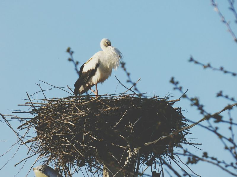 Bird Nature Animal Themes Animal Wildlife Perching Animals In The Wild Spring Beauty In Nature Storks In The Wild