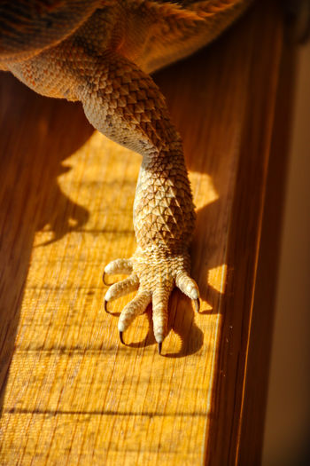 Close-up of lizard paw