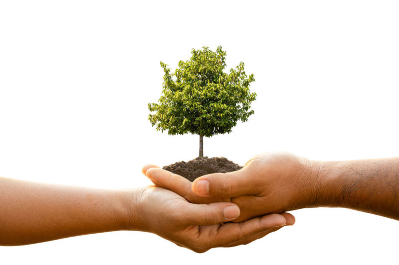 Cropped image of hand holding small plant against white background