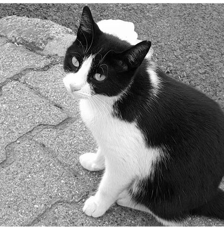 Black And White Friday Pets Domestic Animals One Animal Animal Themes Domestic Cat EyeEmCatlovers Eyeemcats