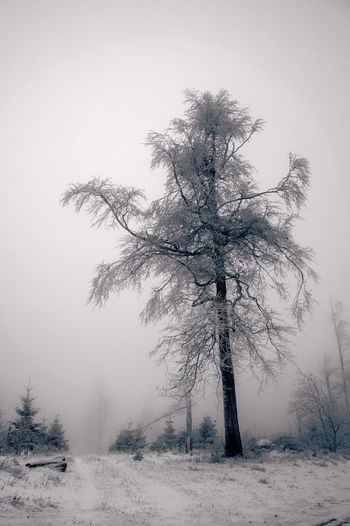 frosty Bare Tree Beauty In Nature Cold Temperature Day Fog Landscape Nature No People Outdoors Rime On Tree Snow Tranquility Tree Winter