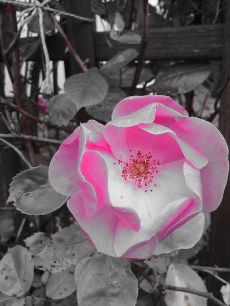 Colorkey Flowers Color Key Colorkey Eyeem Colorkey