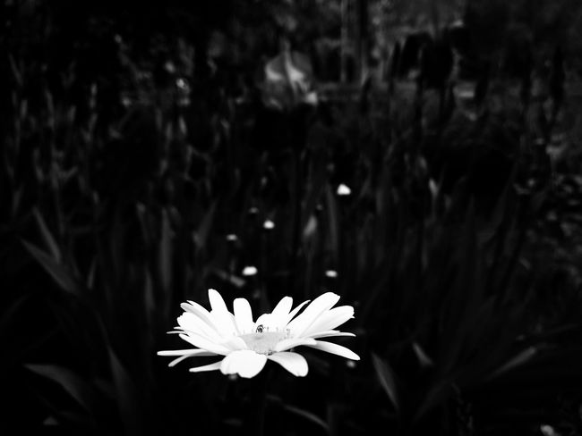 Иногда цвет не решает... Flower Beauty In Nature Nature No People Helloworld Monochrome
